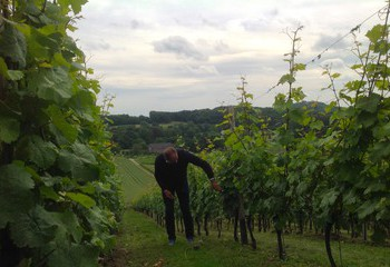 Winemaker Mathieu Hulst at work in the vineyards of Wijngaard Apostelhoeve