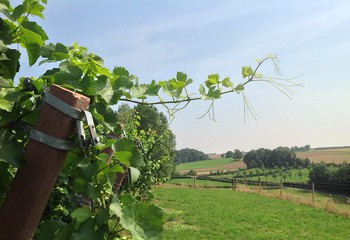 Vineyards of Domein De Wijngaardsberg