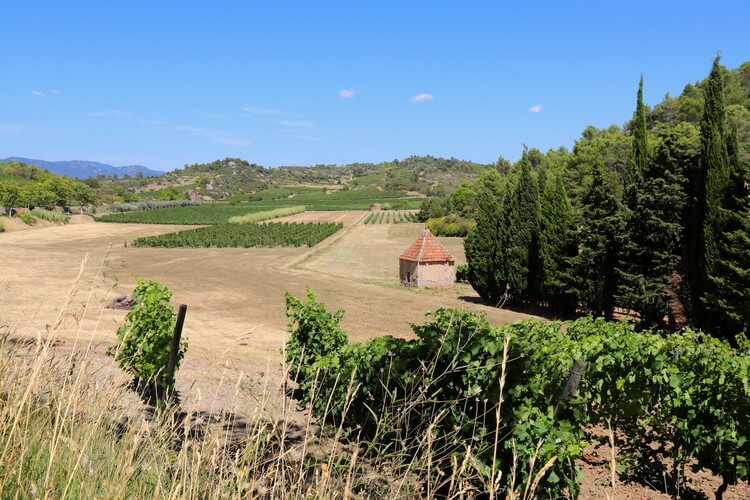 Southern side of the Saint-Chinian Appellation