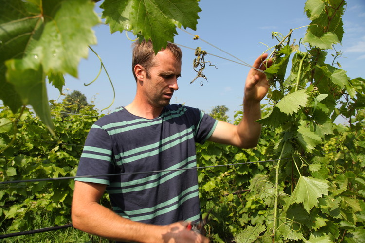 Winemaker Ron Langeveld of Wijngaard Dassemus